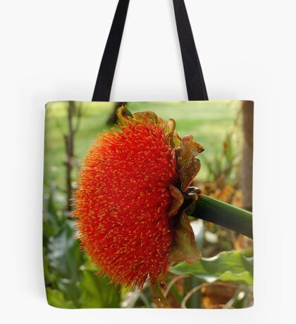 SCADOXUS puniceus – Blood Lily – Rooikwas Tote Bag