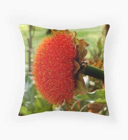 SCADOXUS puniceus – Blood Lily – Rooikwas Throw Pillow