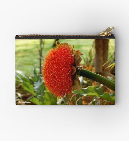 SCADOXUS puniceus – Blood Lily – Rooikwas Studio Pouch