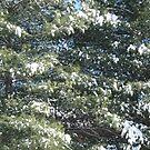 WINTER TREE by Debra Willis