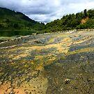 Lake Ohakuri, North Island, New Zealand by Dave Cauchi