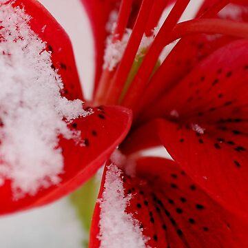 Frozen fairy dust by AnnaRose