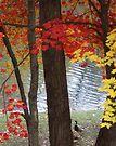 Fall - Woodlake by John Schneider