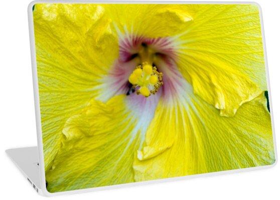 Yellow Hibiscus SRF 17 5799 by Jambulee