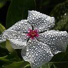 Natures Glitter And Shine by Joy Watson