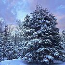 Winter Wonderland by Riggzy