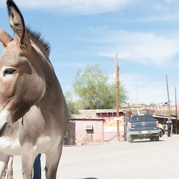 Oatman donkey in main street of small old ghost town on Route 66. by brians101