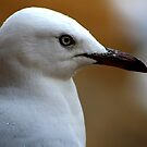 Gull profile by Pete Chennell