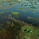 Okavango Delta aerial view 3 by quentinjlang