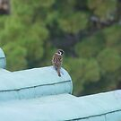 Bird at Nagoya Castle by Nick Lowe