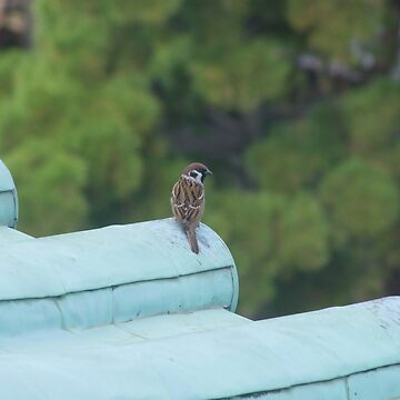 Bird at Nagoya Castle by nicklowe
