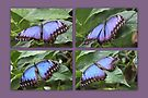 Blue Morpho collage by missmoneypenny