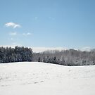 Winter Wonderland by Sarah Cook