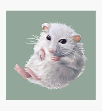 Cute hamster Photographic Print