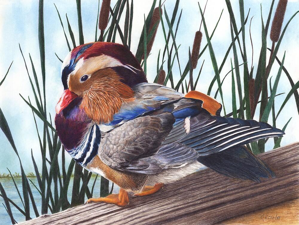 Mandarin Duck by Marlene Piccolin