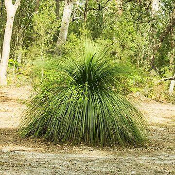 Grass Tree Glade by KazM