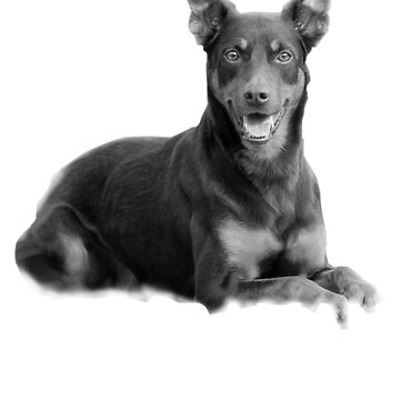 Australian Kelpie Because People Suck by ferriliu