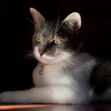 Kitten  by lightwanderer