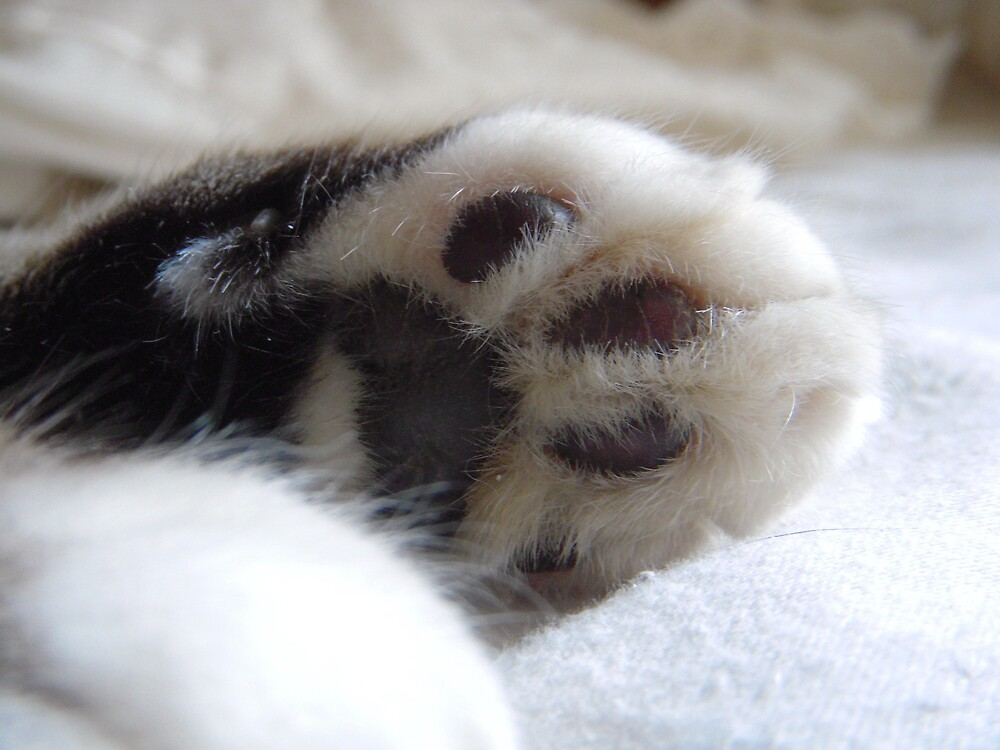 Busters Pawpads by Tama Blough
