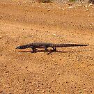 Why did the lizard cross the road by georgieboy98