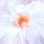 Hier kommt die Braut - eine schöne weiße Dahlie von Anita Pollak