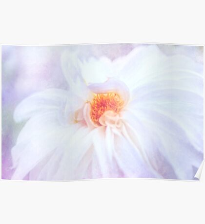Here Comes The Bride - A Beautiful White Dahlia Poster