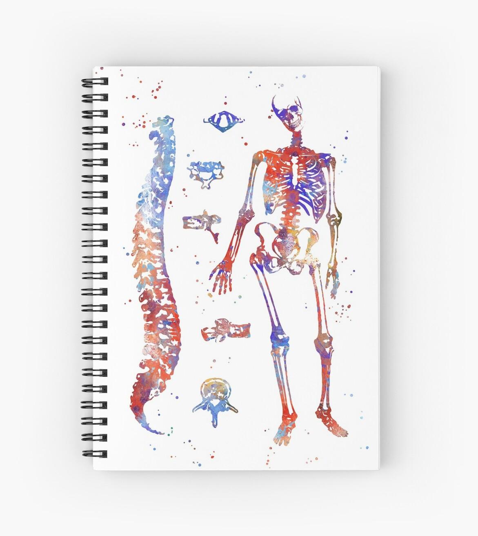 Cuadernos de espiral «Huesos de anatomía humana, diagrama óseo ...