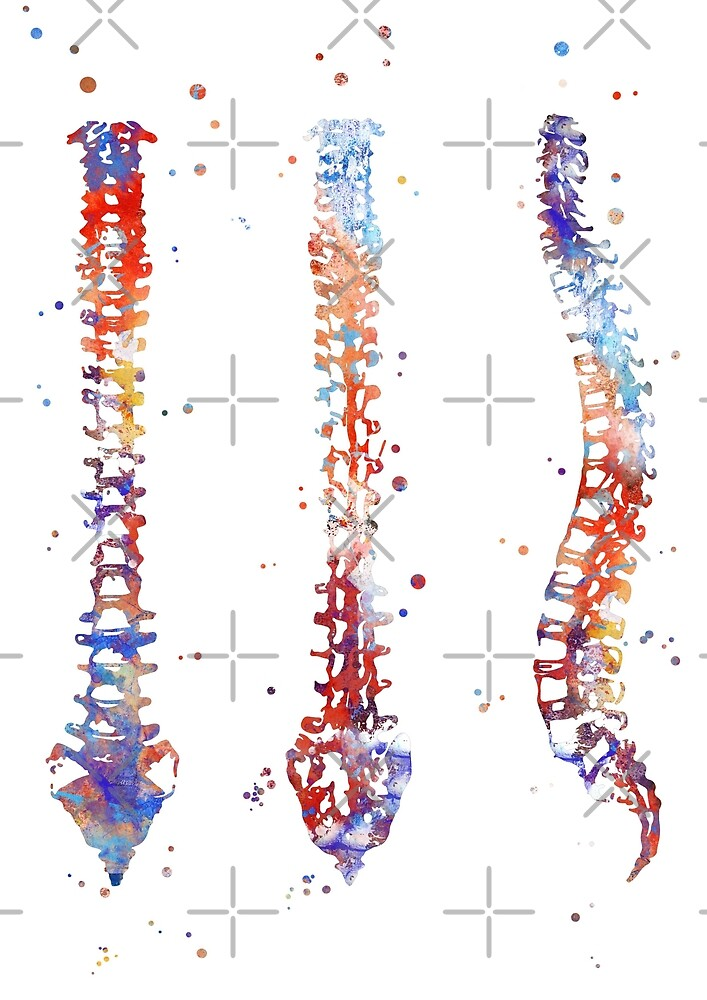 Spine, watercolor Spine, anatomy art, spinal cord\