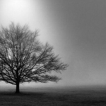 Fog by Isch