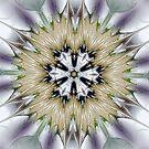 Glass Burst by Barbara A Lane