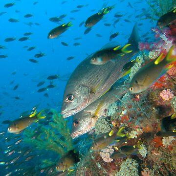 Pisces by scatrdjason