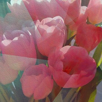A Dream of Tulips by BettyMackey