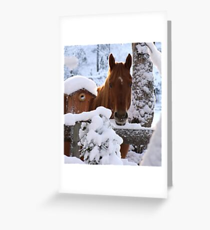 Stop Taking Pictures and Get My Breakfast!!! Greeting Card