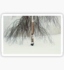 Willow in Snow Sticker