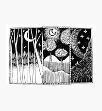 Three Moon Forest Photographic Print