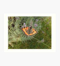 Butterfly on Lavender Art Print