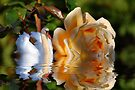 A Swans Rose  by Elaine Manley