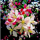 Apple Blossom Confetti 6970  by Candy Paull