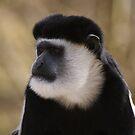 Monkey by Mooguk