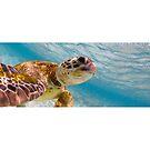 Sea turtle selfie - Mugs by Kara Murphy