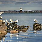 Group photo session - All Gulls ready? guess not... by Poete100