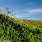 Sea View Estates Beach Grass by dennisjordan