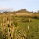 Grass by Jonathan Dower