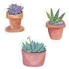Succulent stickers! Fun handpainted potted plants to make your day fun! by shoshannahscrib