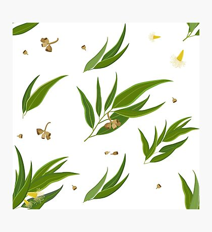 Floral pattern of eucalyptus leaves and seeds Photographic Print
