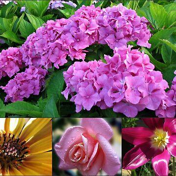 Hydrangea Collage with Cape Daisy, Rose and Tulip by SunriseRose