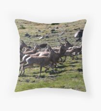 Young Bighorns Running Throw Pillow