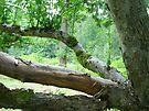 Old Apple Tree by Tori Snow