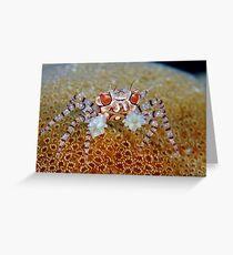 Boxer Crab Greeting Card
