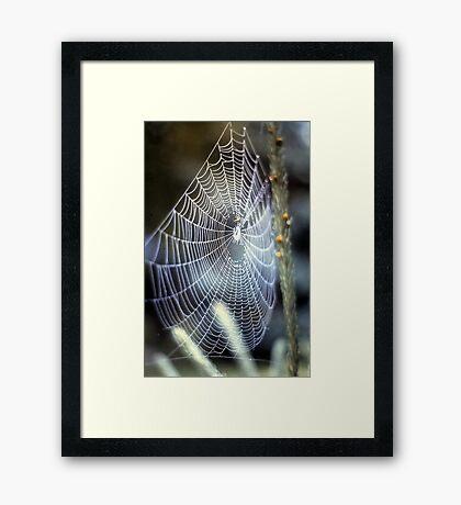 O' what a tangled web we weave.... Framed Print